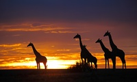 GROUPON: ✈ 8-Day Kenya Safari with Airfare Safari in Kenya with Airfare