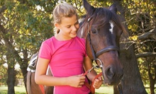 One or Three Children's Horseback-Riding Lessons at Gallop Again in Harrison (Up to 57% Off)