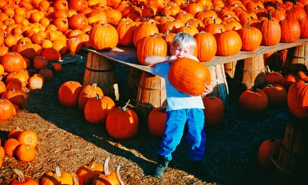 Pumpkin Daze Autumn Festival for Four or Six at Abbey Farms of Marmion Abbey (Up to 49% Off)