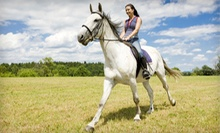One or Three 60-Minute Horseback-Riding Experiences at Fun With Horses (Up to 51% Off)