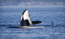 $59 for a 3.5-Hour Whale-Watching Trip from Outer Island Expeditions ($109 Value)