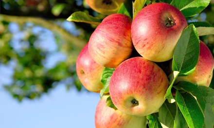 Apple-Picking and Cider-Making Experience for Two, Four, or Six at Montgomery Orchard (Up to 52% Off)