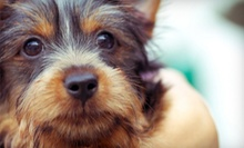 Three or Seven Nights of Pet Boarding or Pet Vaccination Package at Paddock Park Animal Care Center (Up to 55% Off)