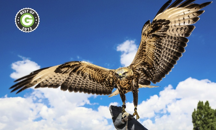 Falconry Experience - Rosliston: Half-Day Falconry Experience from £19 (Up to 63% Off)