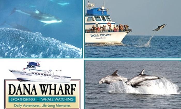 Dana wharf sportfishing whale watching orange county for Dana point fishing charters