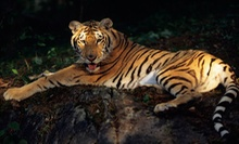 Visit to Heritage Park Zoological Sanctuary (Up to 56% Off). Three Options Available.
