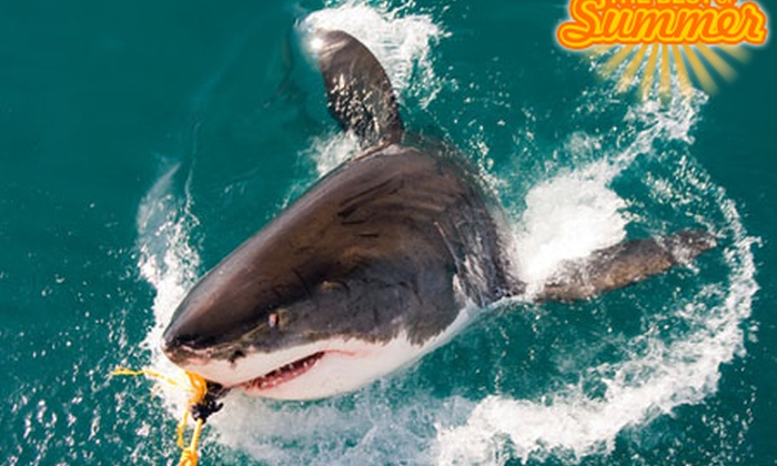 Shark and Safari - Western Cape: Shark Cage Diving with Shark and Safari