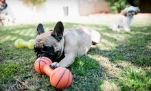 Three or Five Consecutive Days of Dog Boarding from Walk 'n' Roll Pet Sitting (Up to 61% Off)