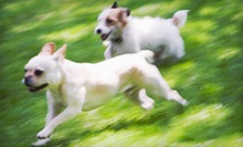 One, Three, or Five Days of Doggie Daycare at The Hound Lounge (Up to 51% Off) 