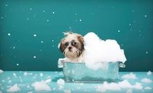 Spa Grooming Package for a Small, Medium, or Large Dog at K9 Playland (Up to 64% Off)