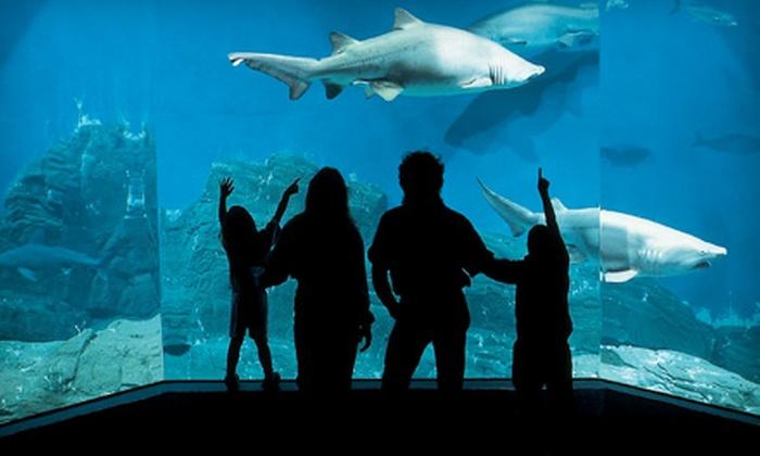 Family Deluxe Aquarium Membership Six Classic Daytime