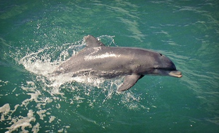 Sunset Dolphin-Watching Cruise for Two Adults or One Child from Adventures in Paradise (Up to 53% Off)