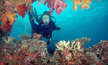 Discover Scuba Experience for One, Two, or Four from Bluewater Divers (Up to 65% Off)