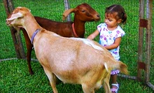 $10 for a Farm Visit for Two at The Little Farm ($20 Value)