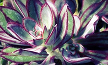 $15 for $30 Worth of Potted Plants at Leucadia Succulents