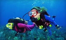 Two-Day or Two-Week Open-Water Certification Scuba-Diving Course at Sea Lions Dive Center (Up to 52% Off)