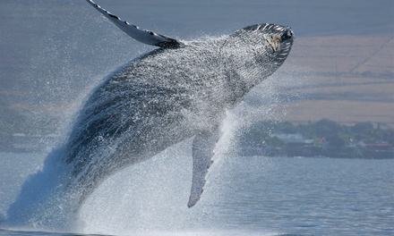 $56 for a Whale-Watching Tour for Two from Capt. John Boats (Up to $94 Value)