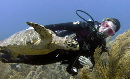 Discover Scuba Experience for One, Two, or Four from Dive Pros (Up to 65% Off)