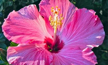 $15 for $30 Worth of Plants and Gardening Supplies at Garden World