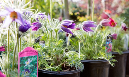 $14 for $20Worth of Plants, Gardening Supplies, & Garden Décor at Echter's Nursery & Garden Center