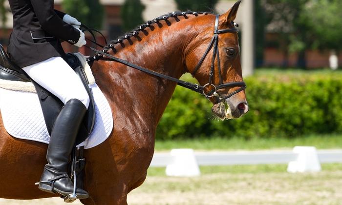 Circolo ippico L' Ulivo - CIRCOLO IPPICO L ULIVO: Fino a 5 lezioni di equitazione da 19,99 €
