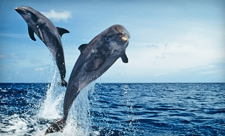 $8 for a Dolphin Watch Nature Cruise from Captain Mark&#x27;s Dolphin Watch Cruise on Hilton Head Island (Up to a $16 Value)