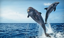 90-Minute Charleston Harbor Sunset Dolphin Cruise for Two or Four from Adventure Harbor Tours (Up to 57% Off)