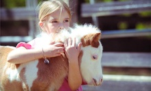 Three Pony Rides, Exotic Animal Adventure, or Mini-Riders Mommy and Me Class at Sweet Meadow Farm (Half Off)