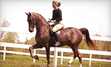 One or Two 30-Minute Horseback-Riding Lessons at Triumph Stables (Up to 51% Off)