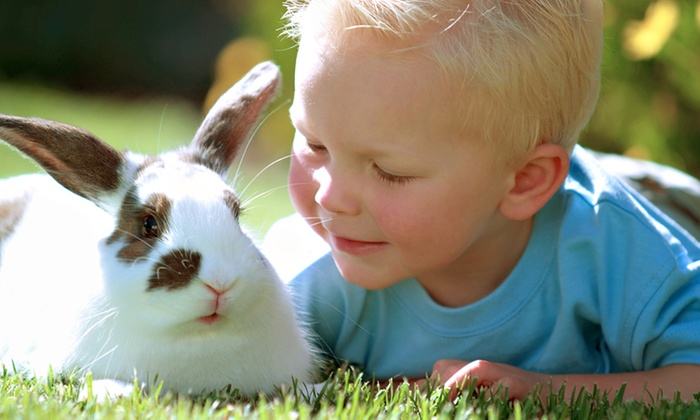 Easton Farm Park - Easton: Easton Farm Park: Entry For Family of Four for £15 (50% Off)