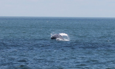 Whale or Dolphin Watching from Cape May Whale Watch & Research Center (Up to 54% Off). Four Options Available.