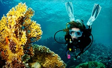 Discover Scuba Introductory Pool Class or Open Water Certification Course from Scuba Network (Up to 63% Off)