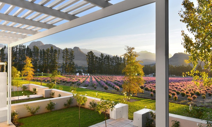 lavender farm guest house - Western Cape: Franschhoek: Bed and Breakfast Accommodation for Two at Lavender Farm Guesthouse