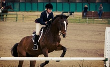 One or Three 30-Minute Private Horseback-Riding Lessons at Pine Grove Riding Academy (Up to 57% Off)