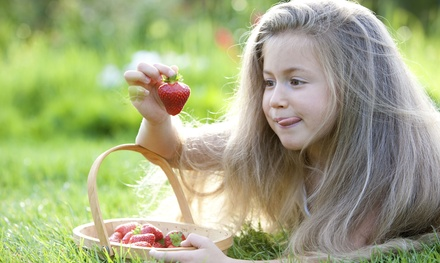 Admission to the Strawberry Festival for Two or Four on June 19 through 21 at Lee Farms (Up to 50% Off )