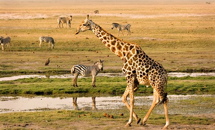 $399 for a One-Hour Giraffe Safari Encounter for Up to Six at Zootastic Park ($800 Value)