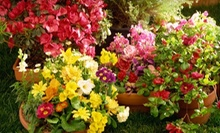 Plants and Gardening Supplies at McDonnell Horticulture Inc. (Up to 61% Off). Two Options Available.