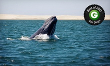 Three-Hour Whale-Watching Tour for One, Two, or 10 from San Diego Whale Watch (Up to 57% Off)