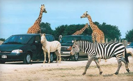 African Safari Wildlife Park Visit on Weekday or Any Day (Up to 73% Off)