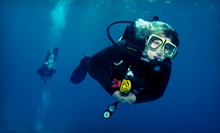 Discover Scuba Course or PADI Open-Water Certification Course at Gigglin' Marlin Divers (Up to 60% Off)