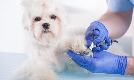 Cão do Bairro — Avenidas Novas: Banho Glamour com higiene para cão de porte pequeno, médio ou grande desde 16,90€