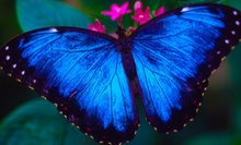 Museum and Butterfly Center or Planetarium Access for Two or Four at Houston Museum of Natural Science (Up to 51% Off)