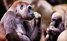 $20 for a Visit to Zoo Atlanta for Two (Up to $43.98 Value)