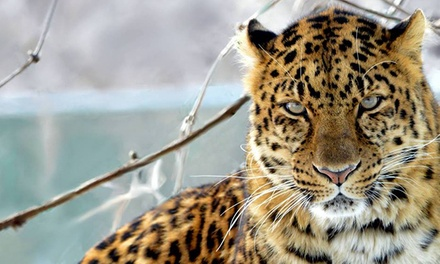 Entry for One, Single-Day Family Pass, or Yearly Pass for One or Family to Jungle Cat World (Up to 52% Off)