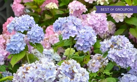 $13 for $25 Worth of Plants, Flowers, and Gardening Supplies at English Gardens