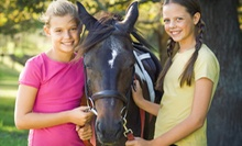 Two, Four, or Six Horse-Riding Lessons, or Birthday Party at Jansal Saddlebreds LLC in Mocksville (Up to 76% Off)