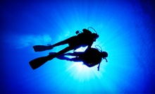 $160 for a PADI Open-Water Diving Course at D. D. Dive ($325 Value)