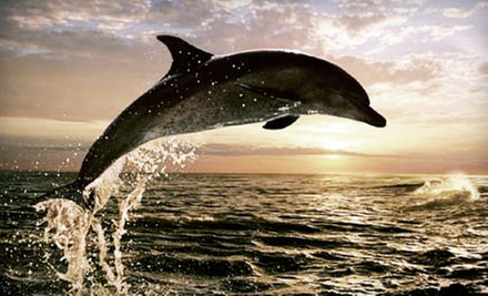 Whale- or Dolphin-Watching Cruise for Two, Four, or Six from Sightseer Whale & Dolphin Trips (Up to 65% Off)