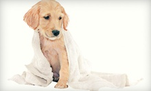 Bath or Full Grooming for a Dog at Luxury Pet Spa & Boutique (Up to 53% Off). Five Options Available.