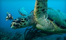 $75 for a Two-Tank Boat-Dive Trip from The Scuba Club (Up to $157 Value)